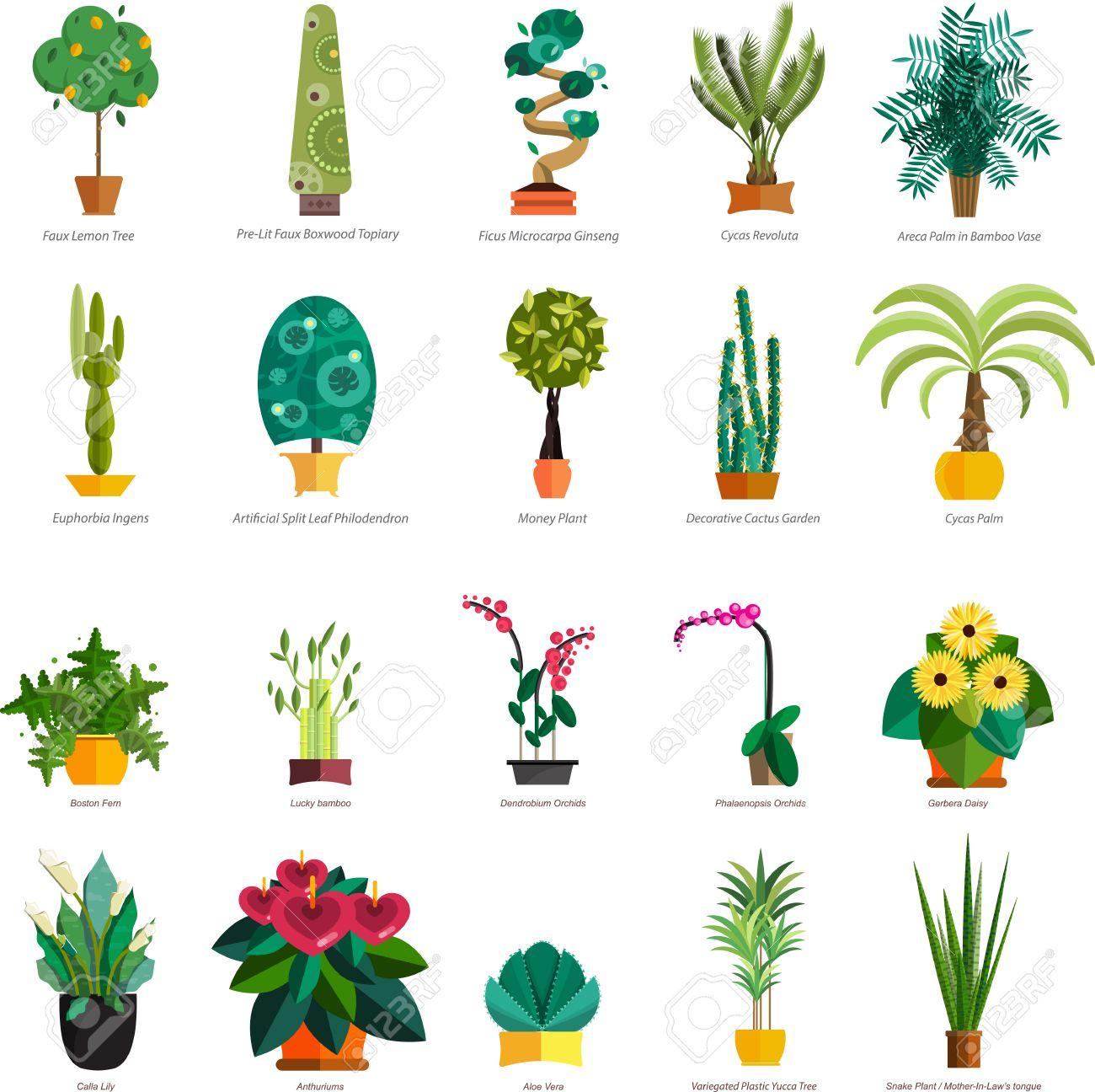 Vector   Vector Set Of Indoor Plants In Pots. Illustration Of Floor Trees  Homeplants For Interior. Plants For Home Decoration. Potted Tree Homeplants  With ...