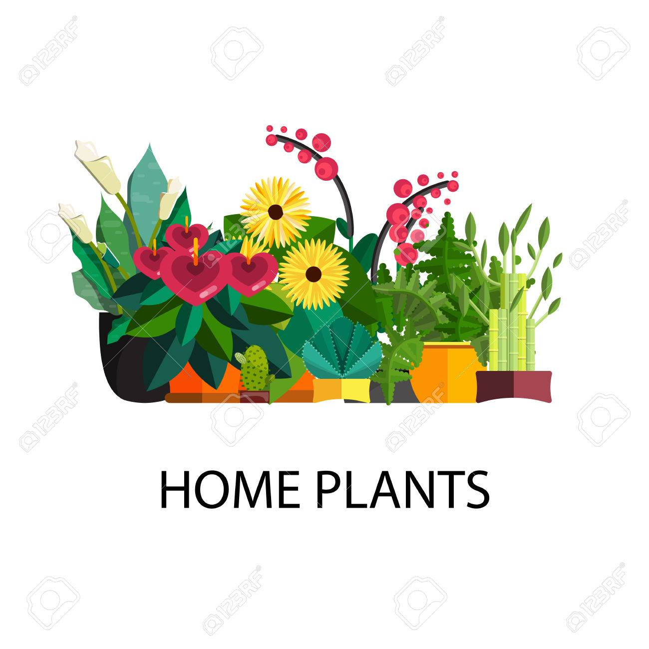 indoor home office plants royalty. Illustration Of Houseplants, Indoor And Office Plants In Pot. Home For Garden Or Royalty U