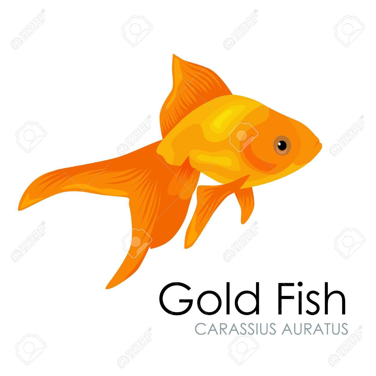 Cute Aquarium Gold Fish Vector Illustration Isolated On White