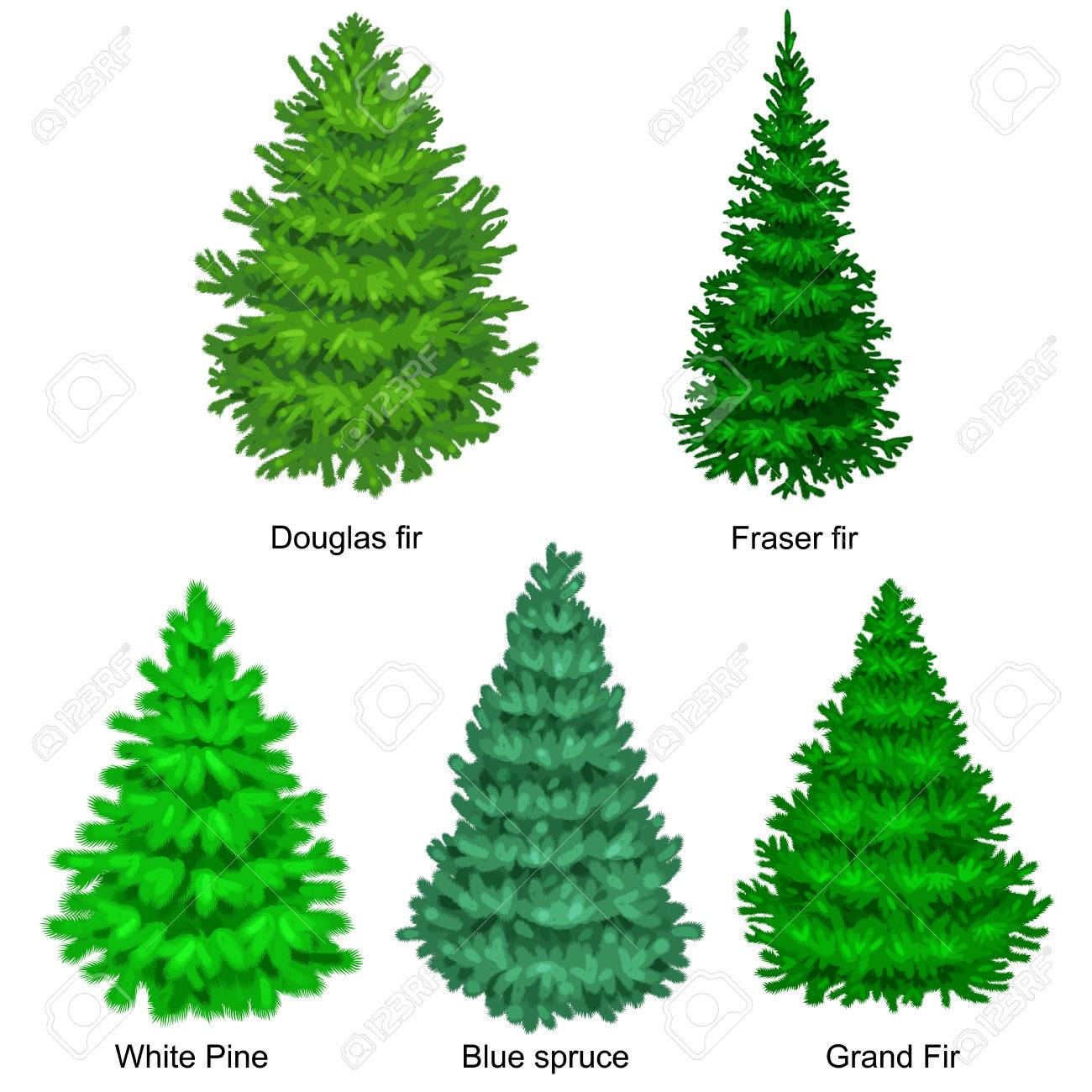 set of christmas vector tree like fir or pine blue spruce for