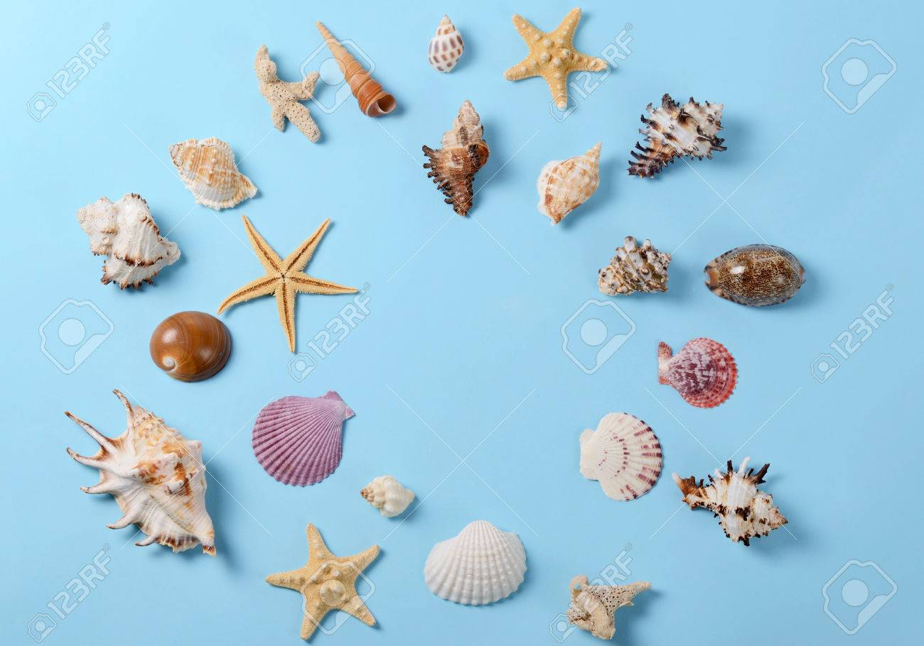 Creative Layout Made Of Different Colorful Seashells And Greeting