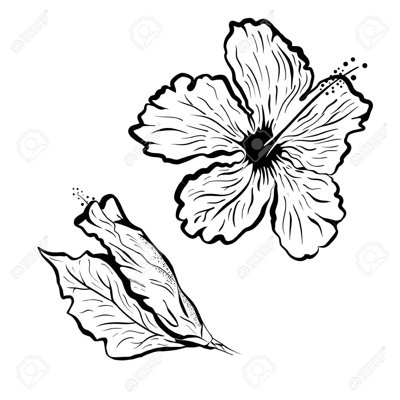 Hibiscus Flower In Tattoo Style Black And White Tropical Flower