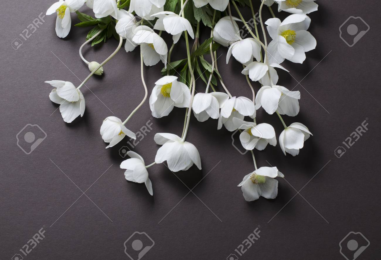 Creative Top View Layout With White Anemone Flowers On A Black