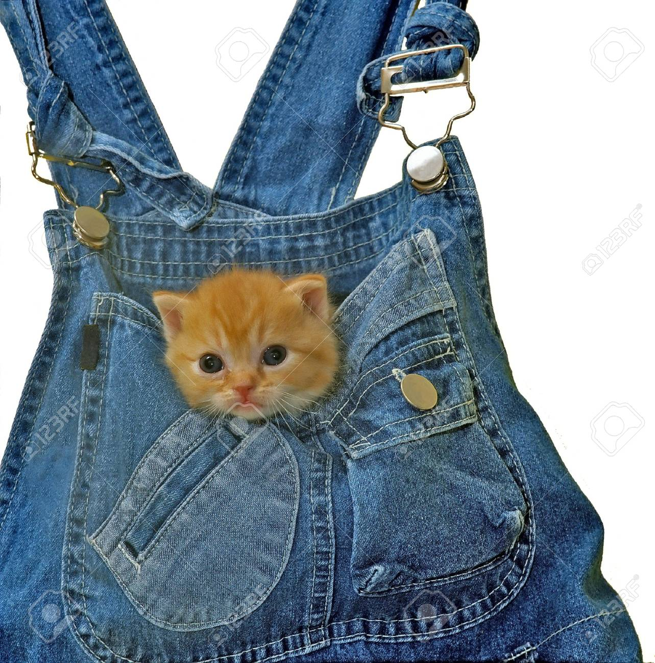 young kitten staring from a pocket - 3608686