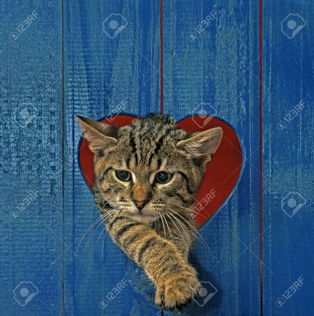 cat looking throw hole in heart shape - 3623866