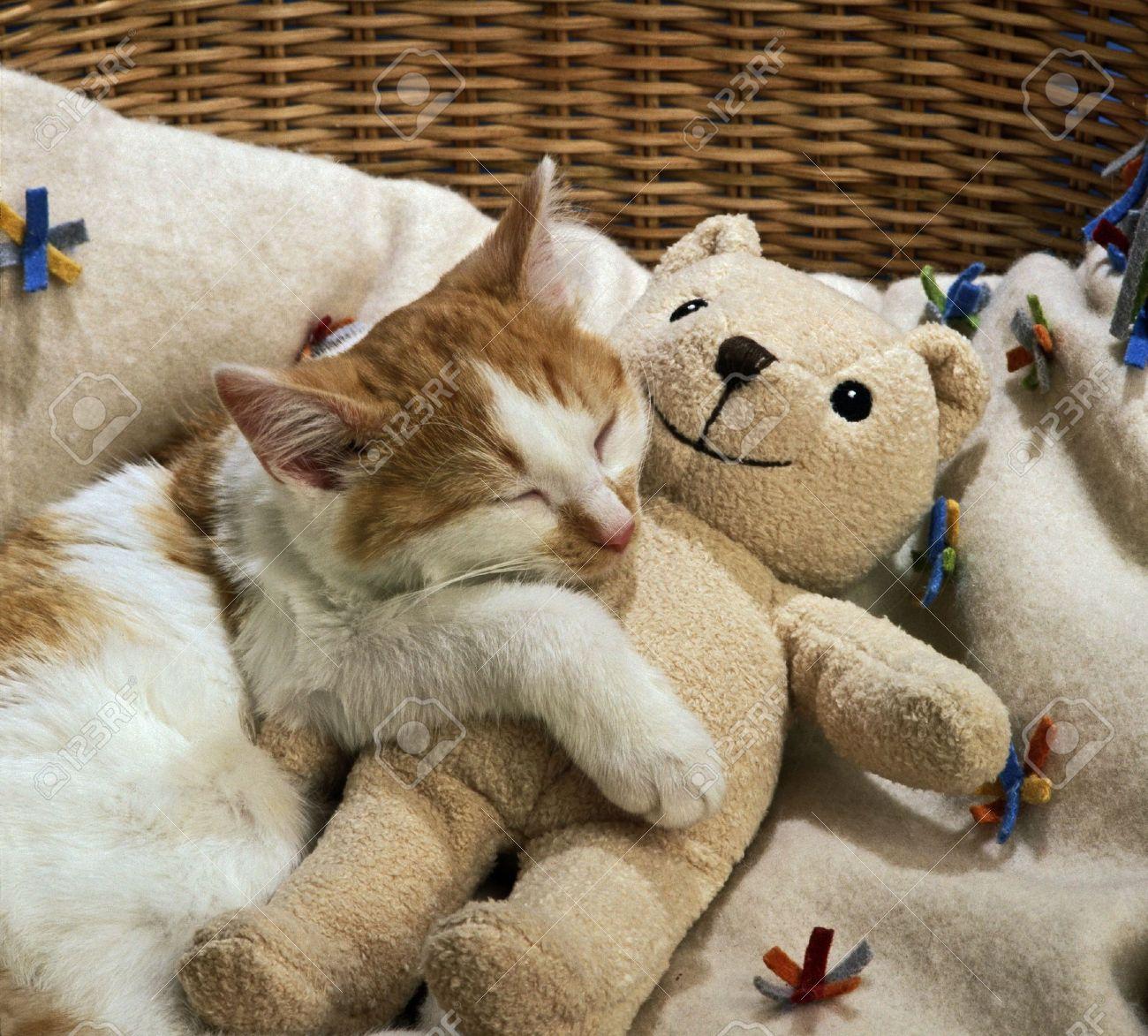 cat sleeping with teddy bear - 3662197
