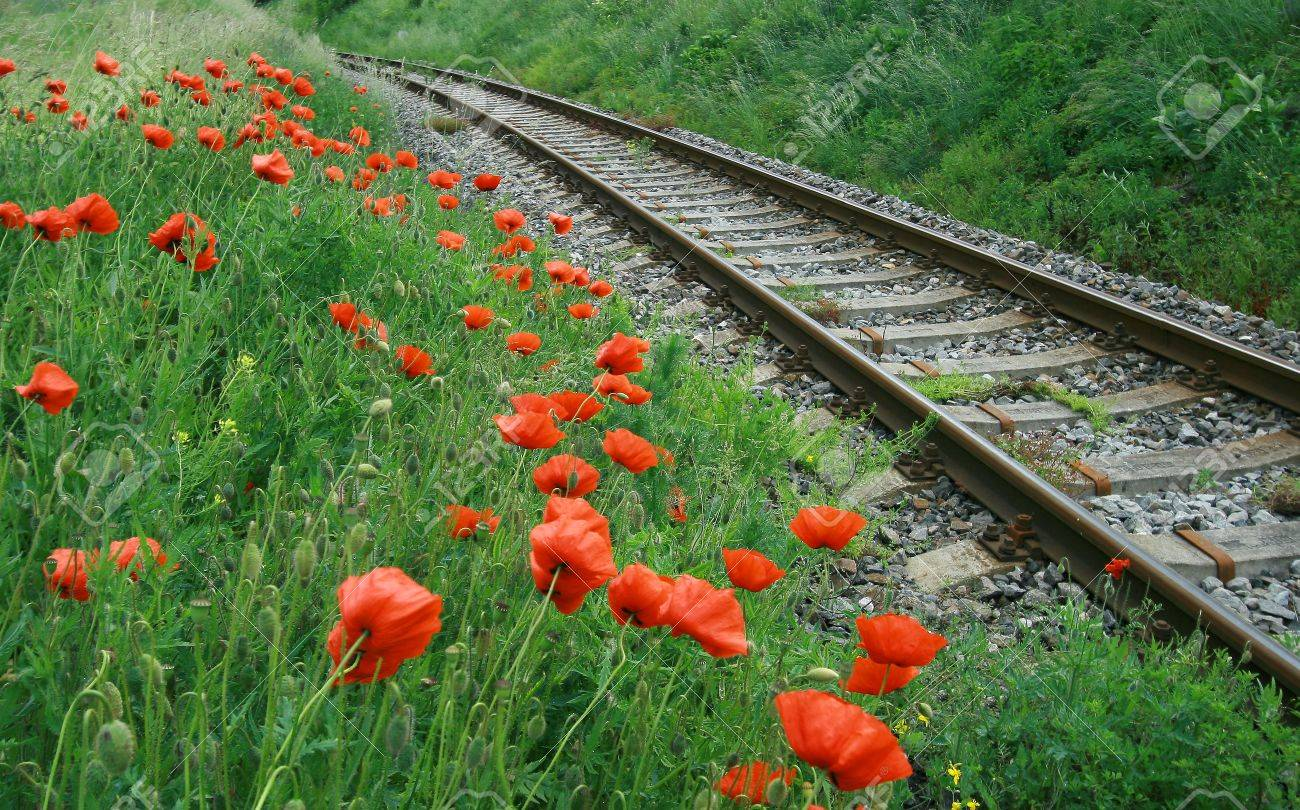 [Image: 7577656-railroad-with-poppy-flowers-Stock-Photo.jpg]