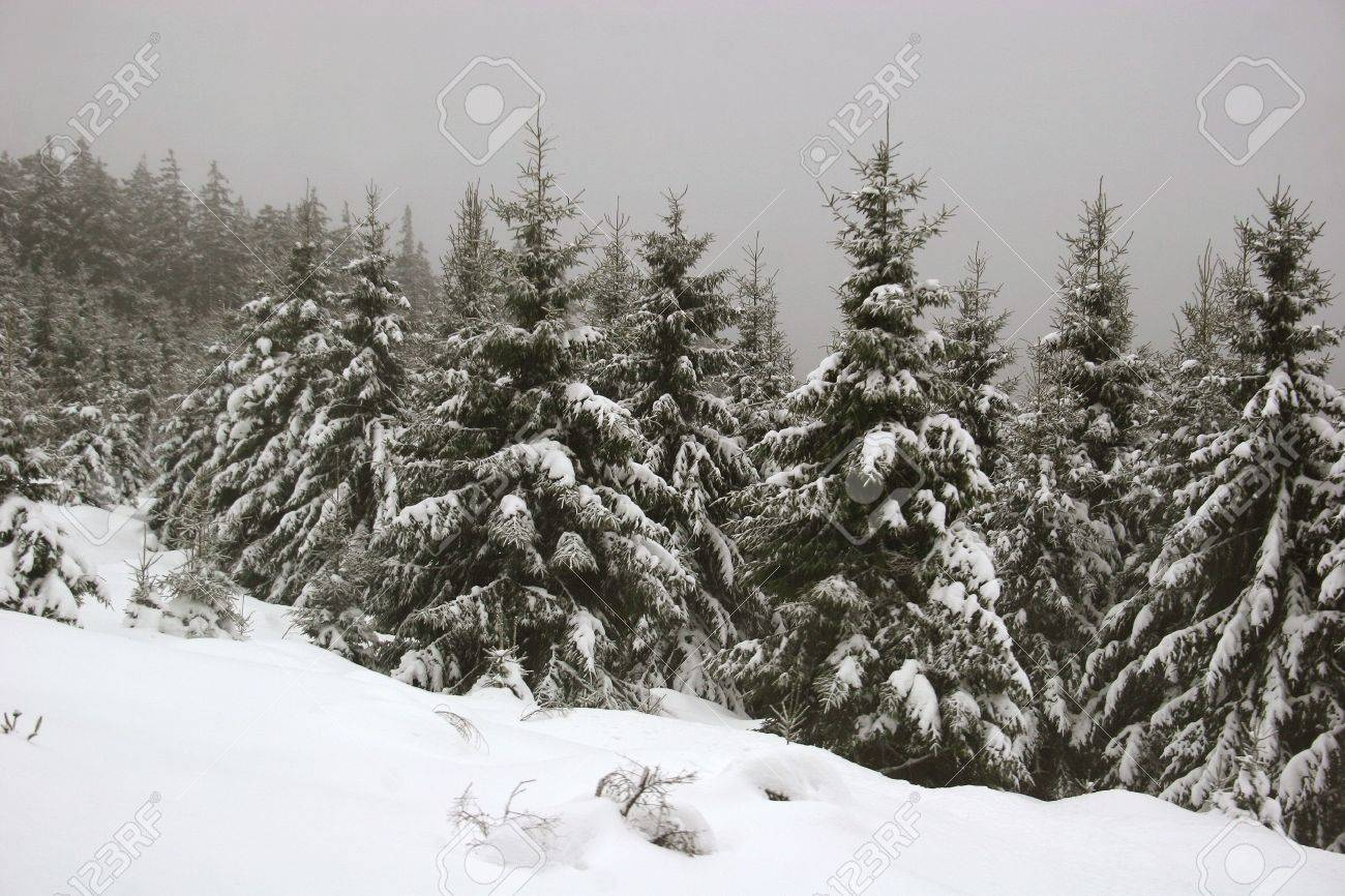 Snow in the german Harz mountains near Mt. Brocken Standard-Bild - 5960291