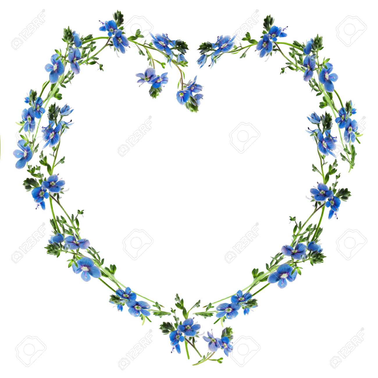 forget me nots made into the heart outline stock photo picture