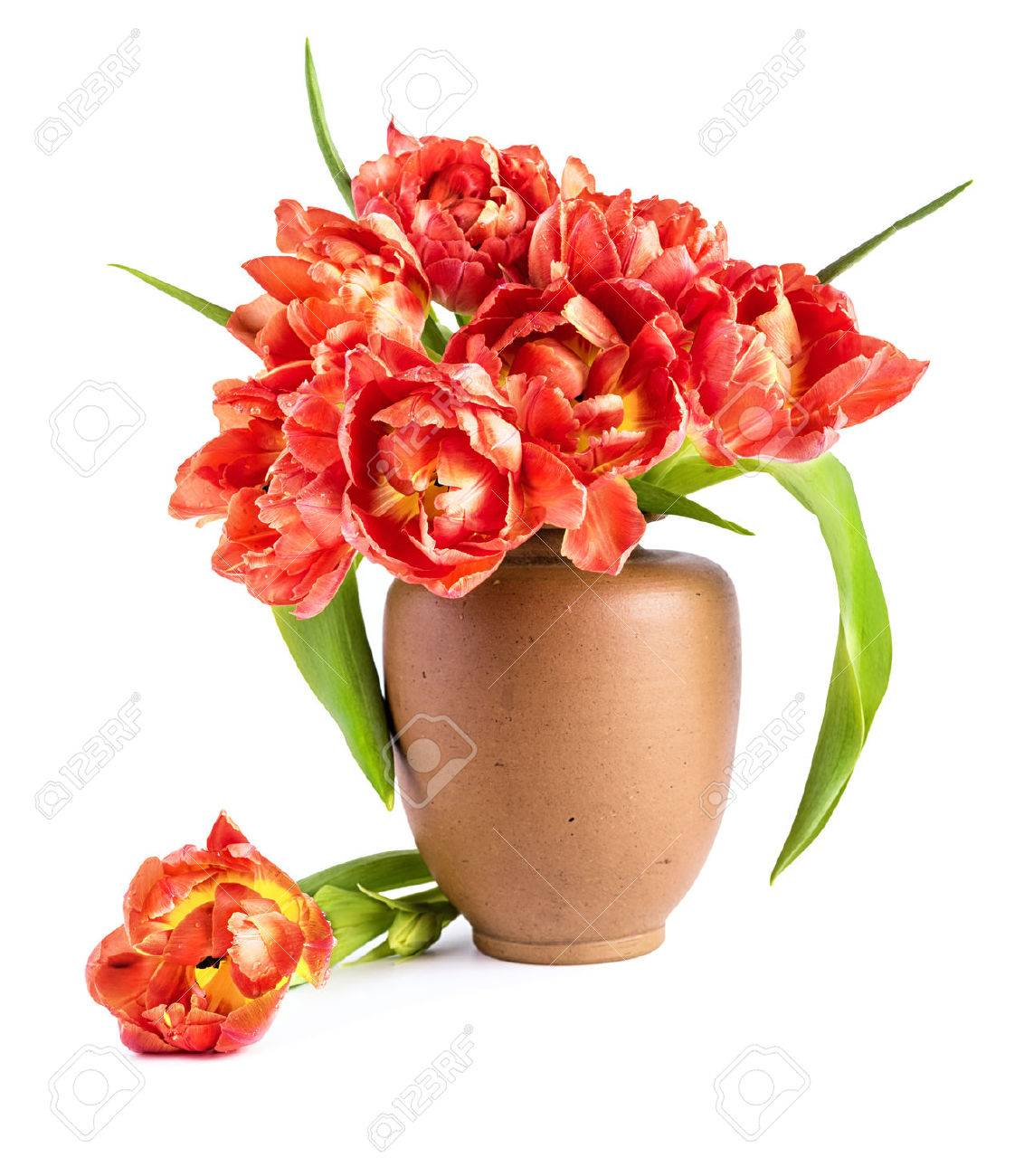 Red tulips in clay vase on white background. Space for your text - 50307832