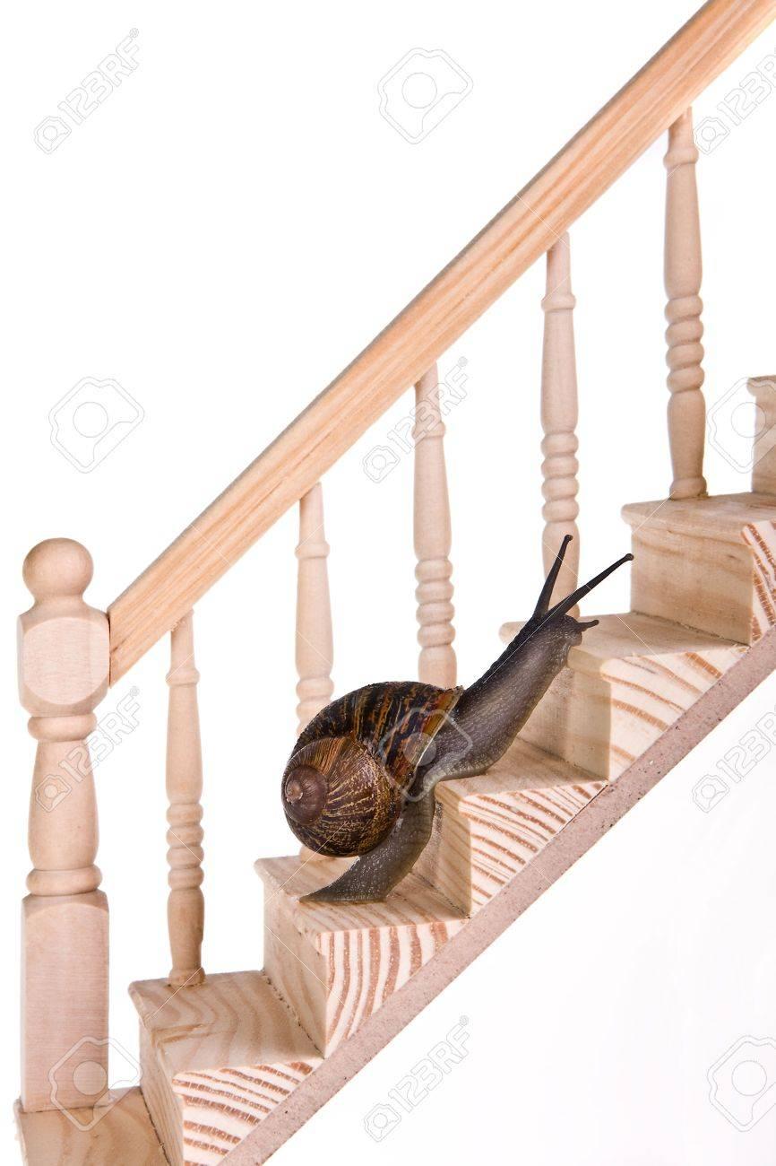 Funny Escargot Réalisé De Bons Progrès Sur Des Escaliers En Bois ...