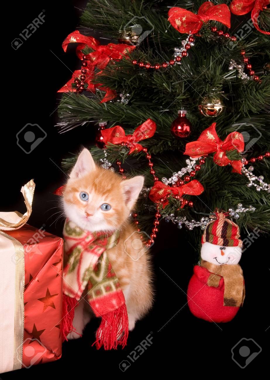 6 weeks old kitten under a christmas tree Stock Photo - 3835110