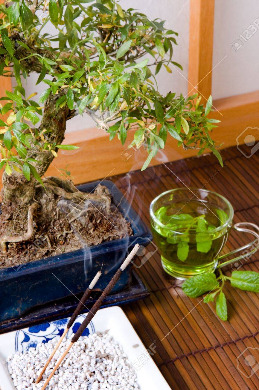 Bonsai; incense and green tea against a japanese traditional shoji window Stock Photo - 3865200