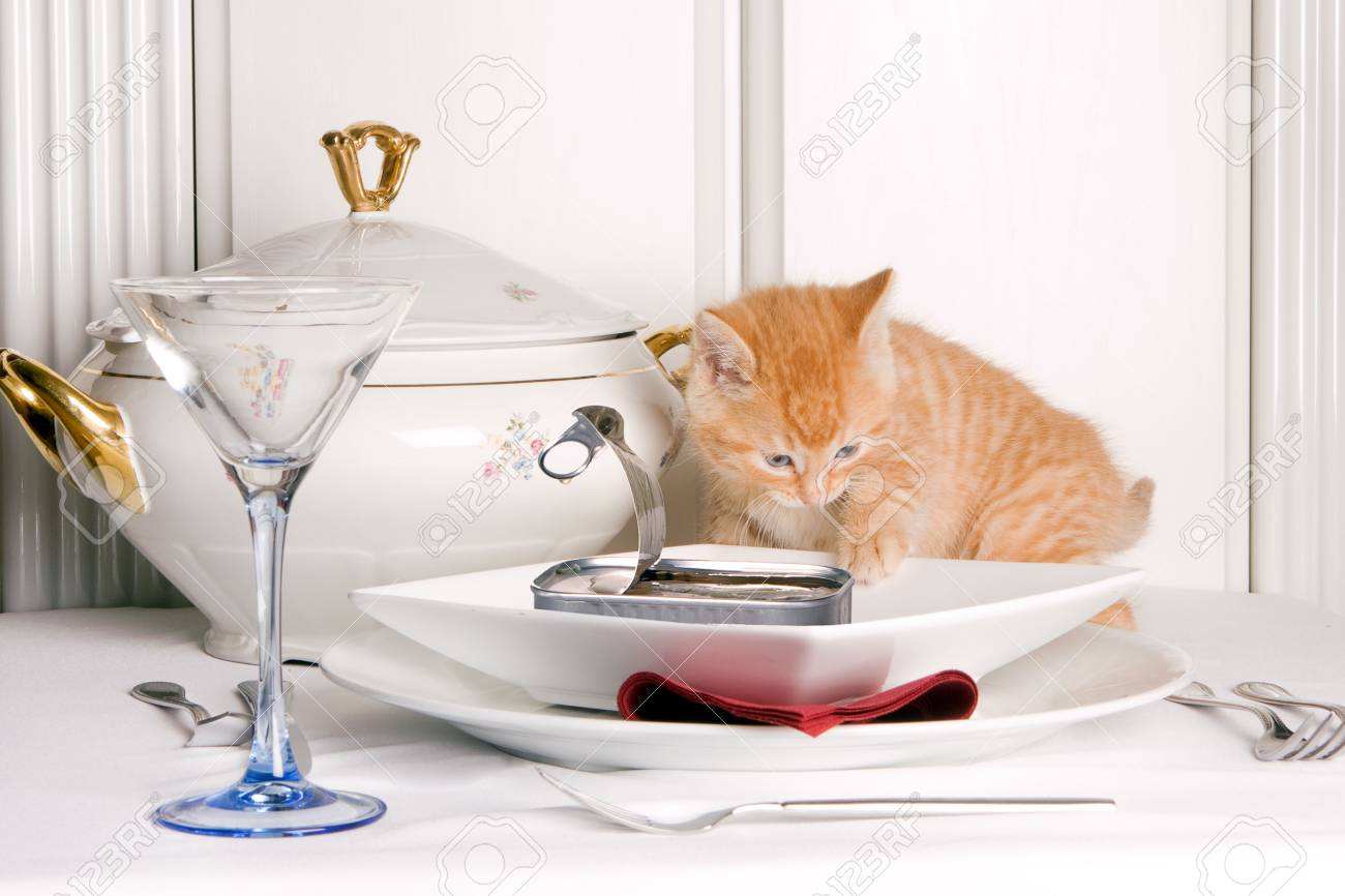 Six weeks old kitten smelling sardines on the table Stock Photo - 4869739