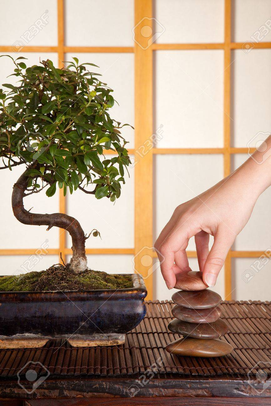 hand stacking zen stones in a japanese interior with shoji sliding windows and bonsai tree stock bonsai tree interior