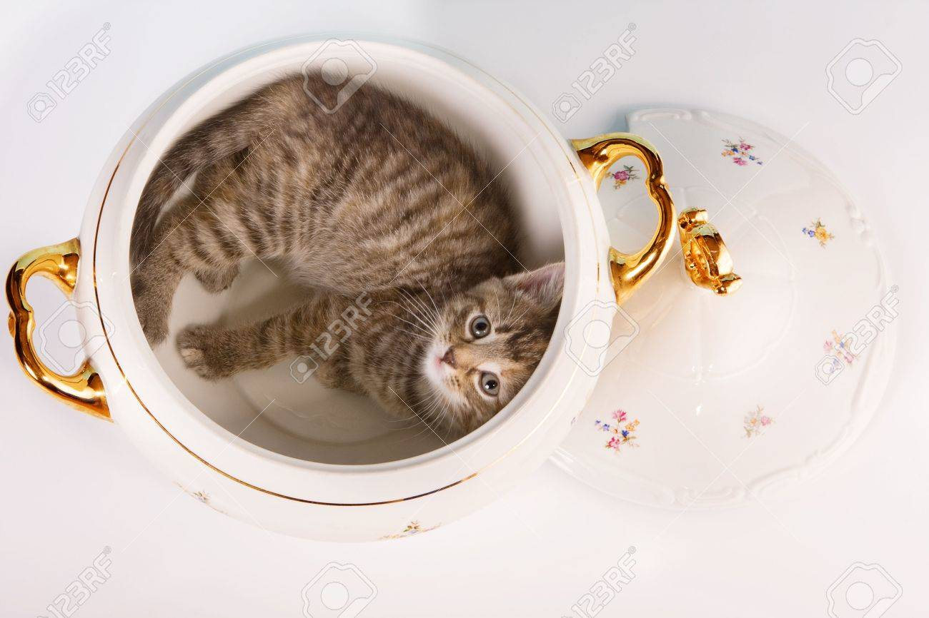 Funny kitten having fun in a soup tureen Stock Photo - 4869791