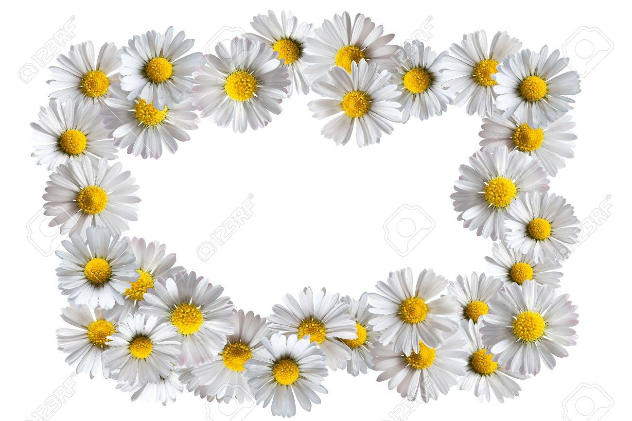Border frame made of isolated daisy flowers stock photo picture and border frame made of isolated daisy flowers stock photo 5329311 izmirmasajfo