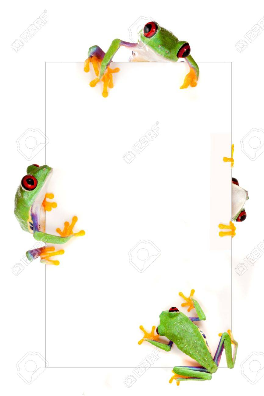 Young red eyed tree frog isolated on a white page as a border frame Stock Photo - 5457097