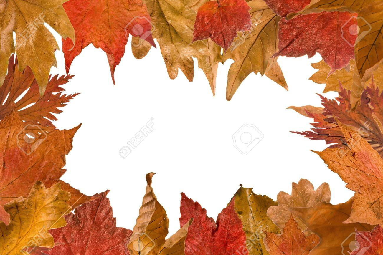 100 autumn color pages coloring book of leaves vector