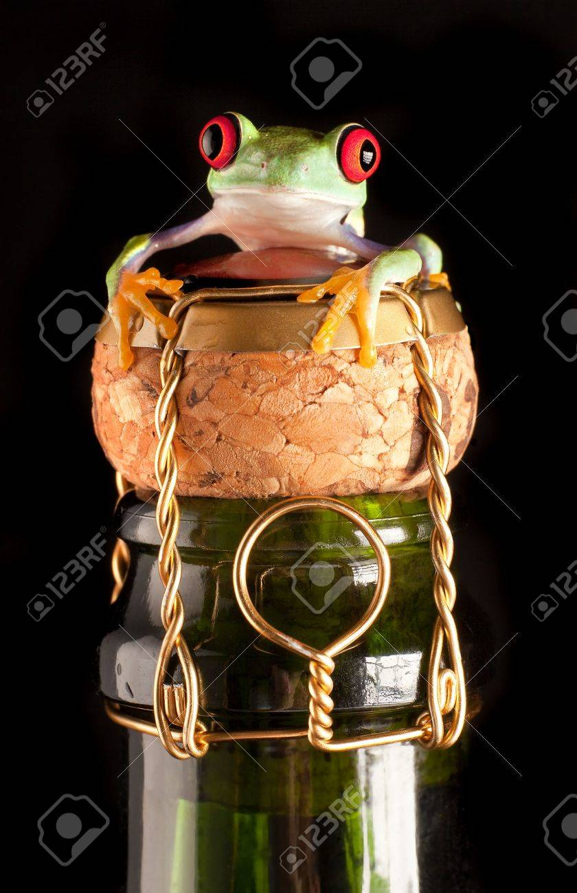 Red eyed tree frog on champagne bottle wishing happy new year - 5688099