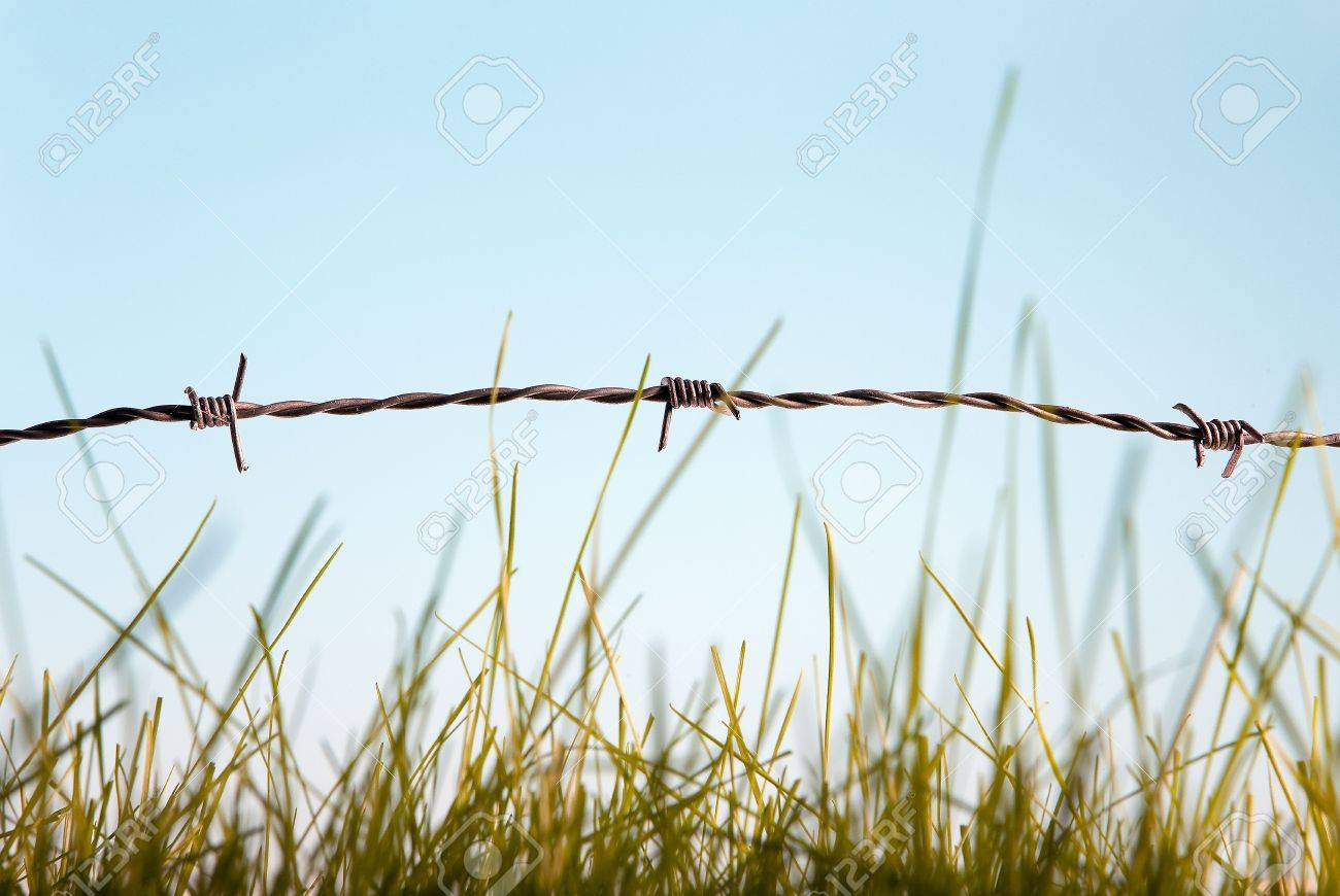 Green grass behind barbed wire symbol of freedom Stock Photo - 6604350