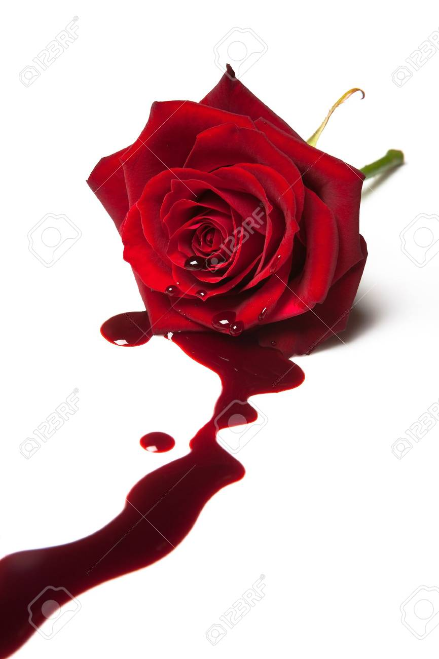 20 best Pictures of bleeding roses