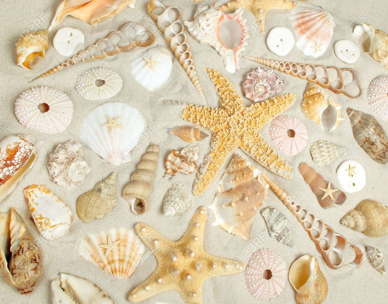 assorted seashells on a filling the frame stock photo