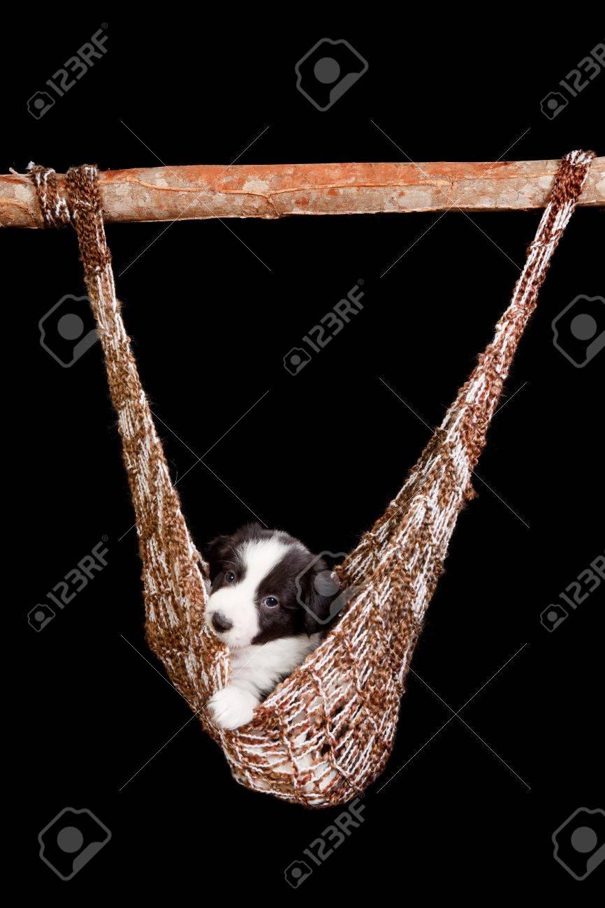 Sleepy puppy of 5 weeks old in a brown hammock Stock Photo - 12609432