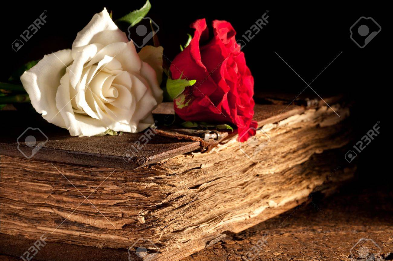 Romantic roses lying on a medieval old book - 16457851
