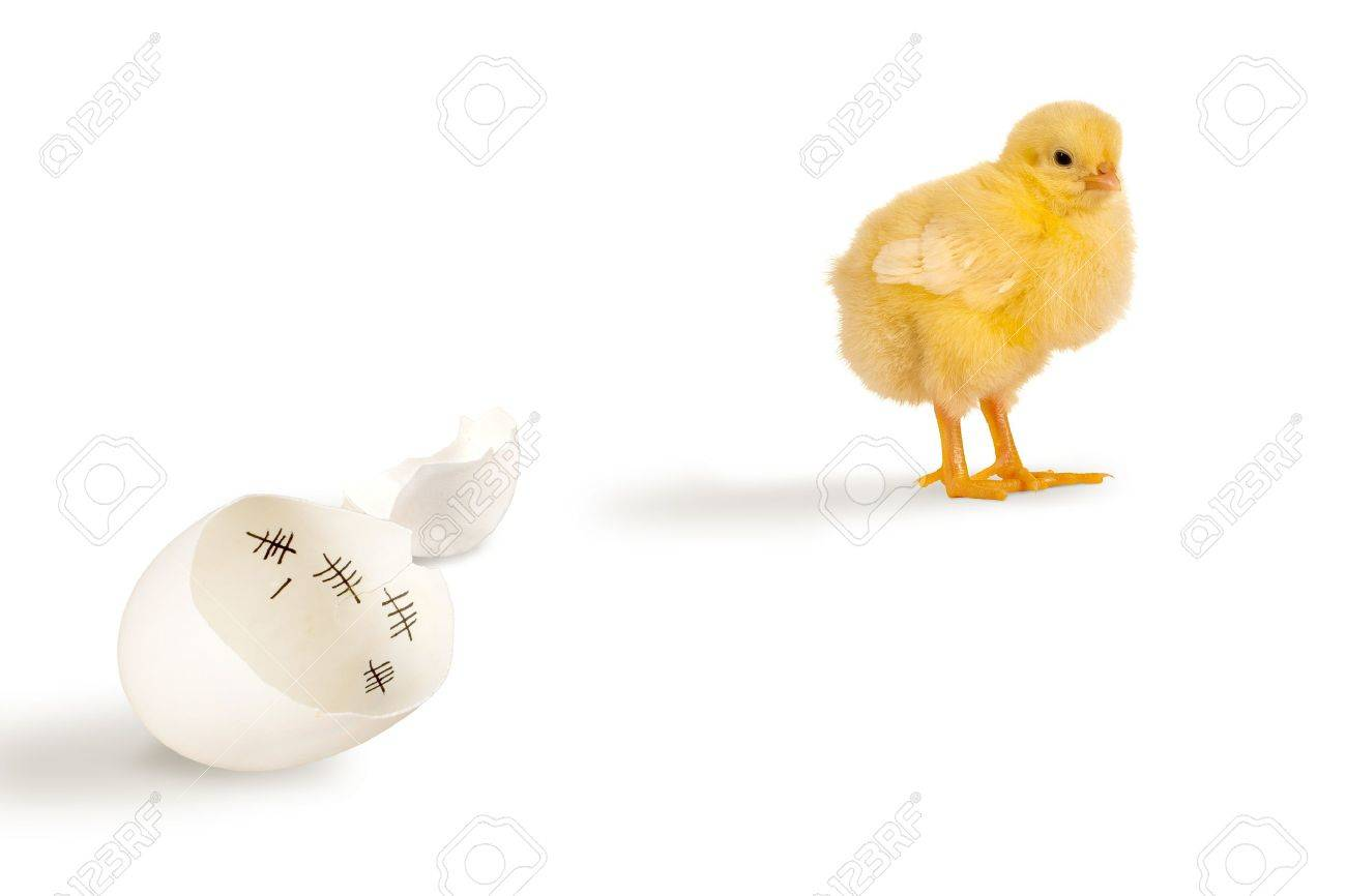 Escaped chick walking away from its eggshell Stock Photo - 18411875