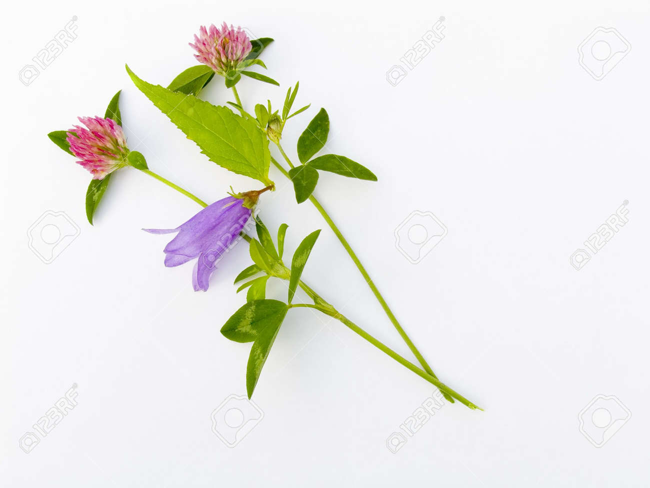 summer flower composition Stock Photo - 605250