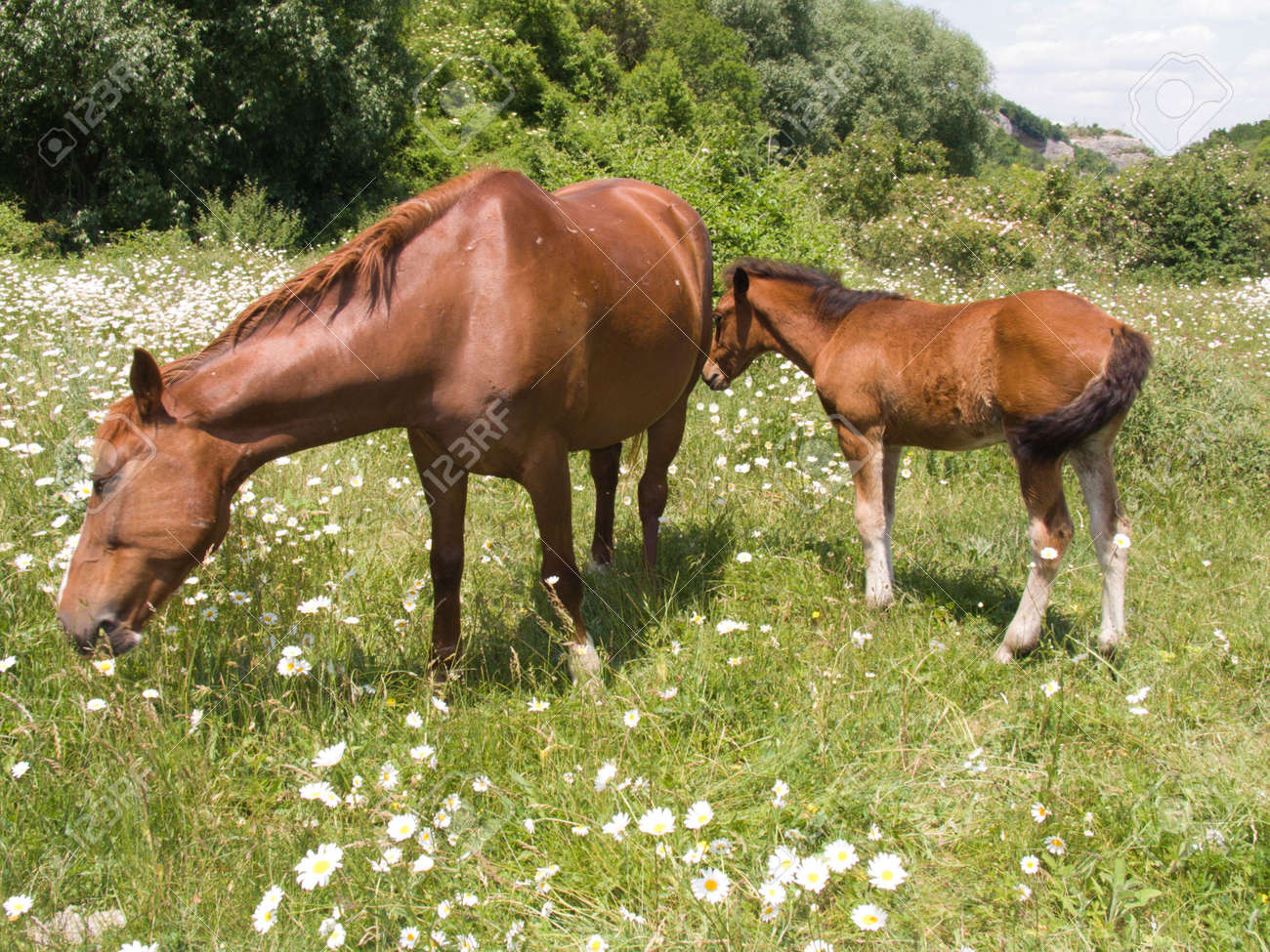 The horse and foal eat a grass on a pasture Stock Photo - 3225911