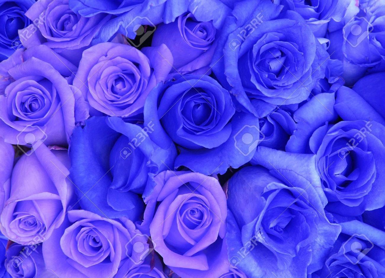 青いバラの背景 の写真素材 画像素材 Image