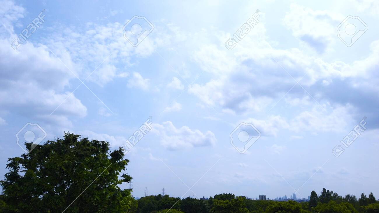 Trees and blue sky - 147154611