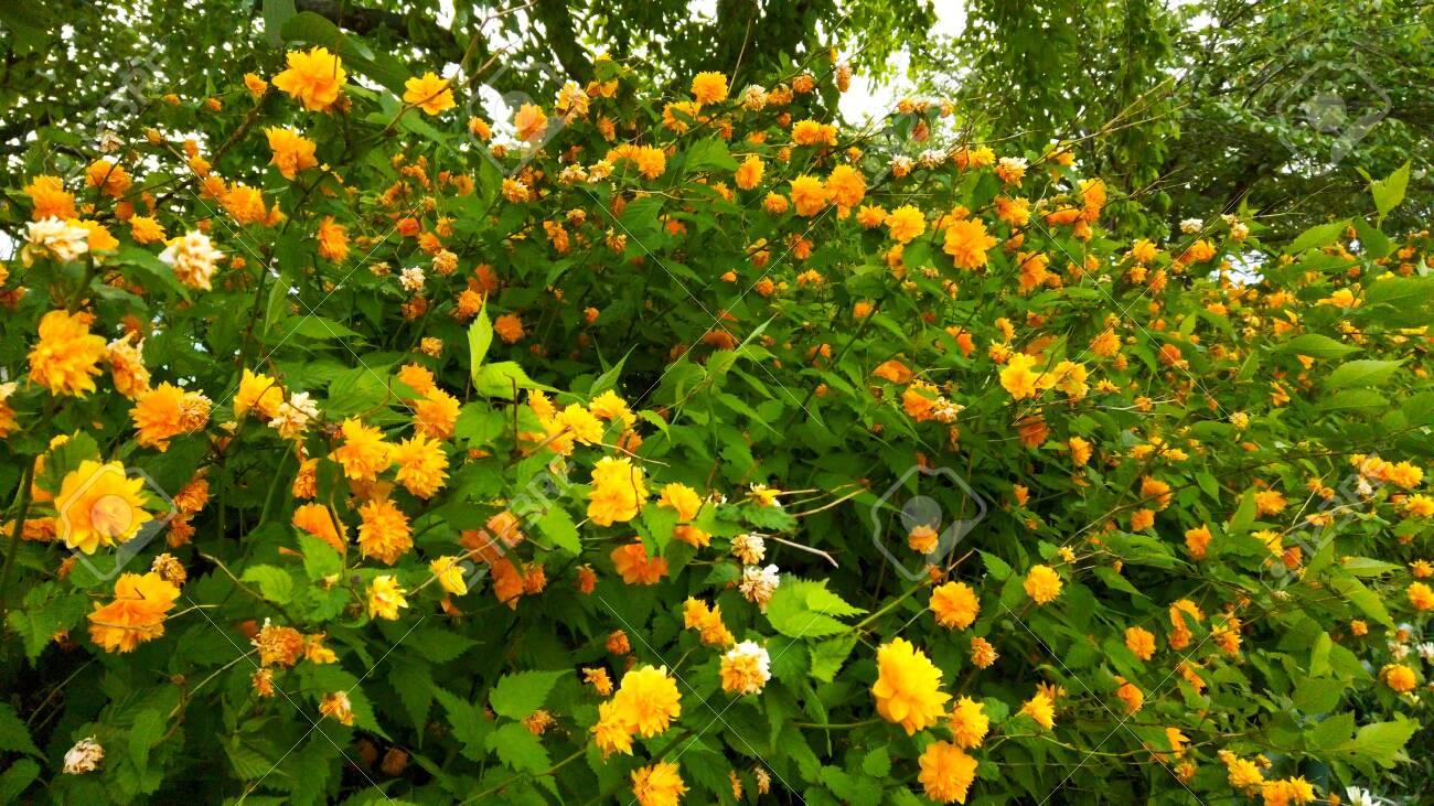 Yellow flowers - 147108655