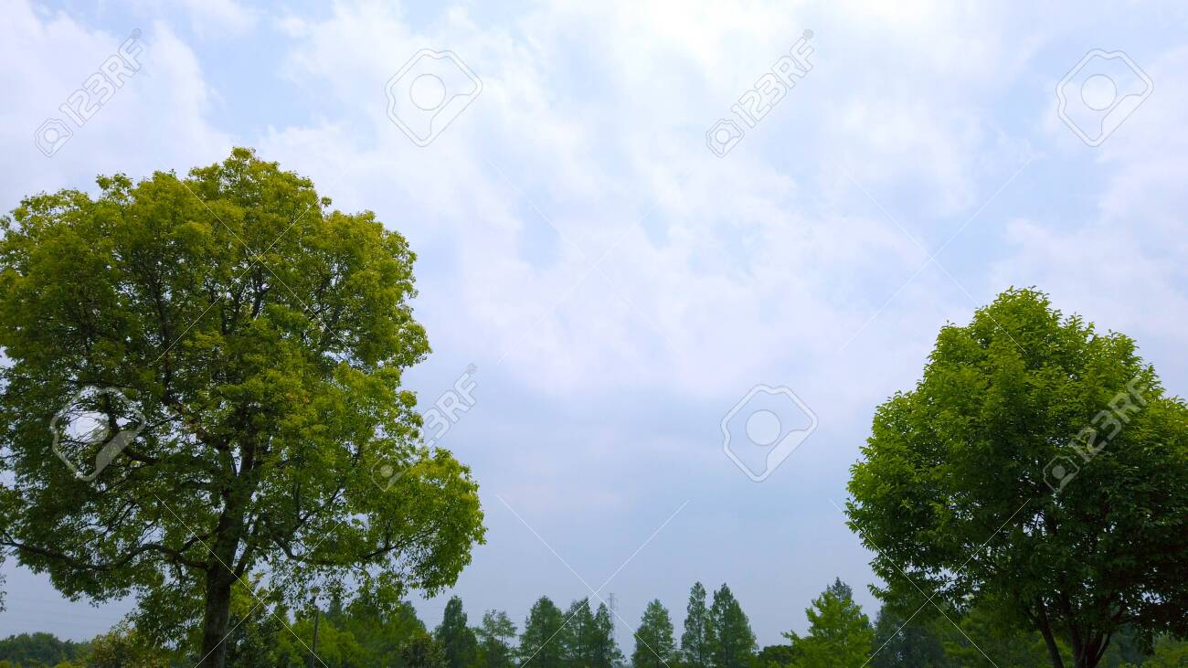 Trees and blue sky - 147227593