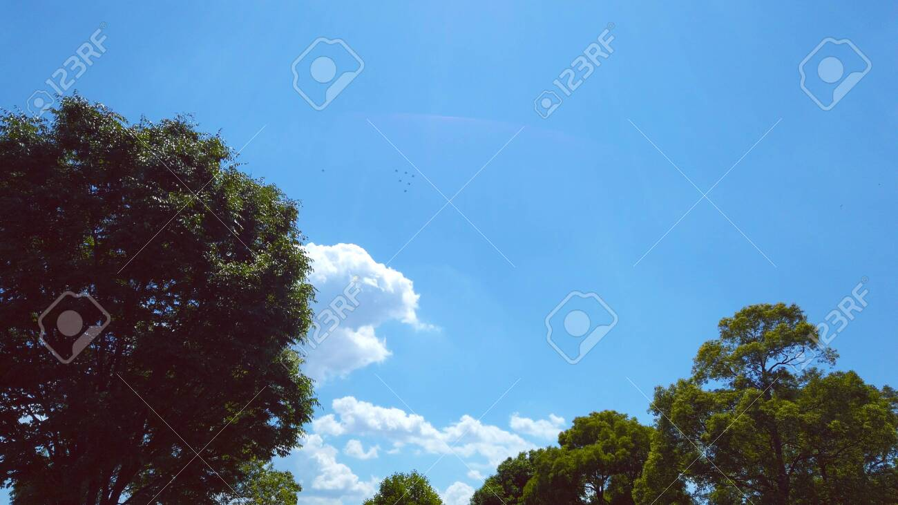 Trees and blue sky - 148088020