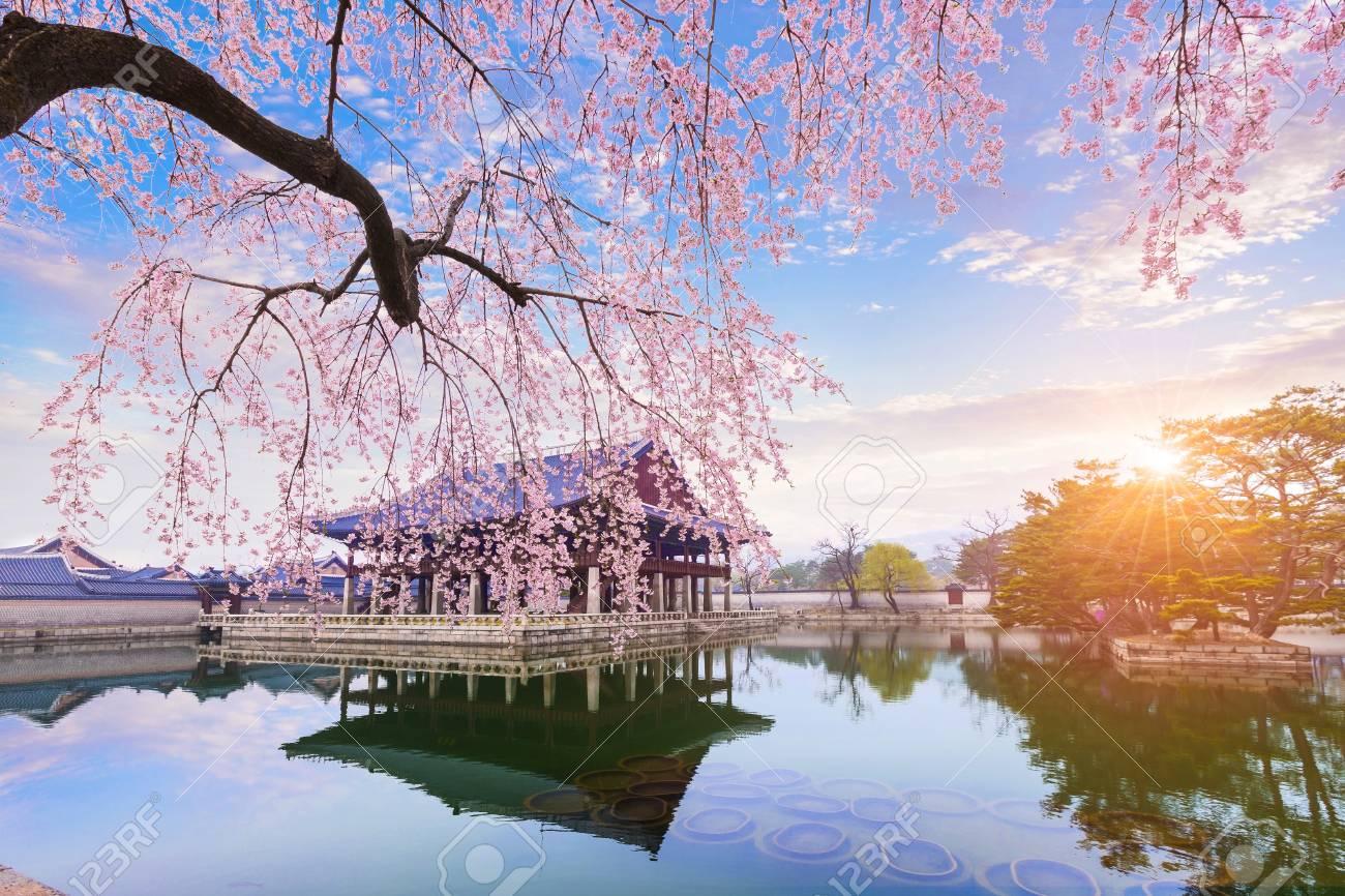 に 桜の は 木の下