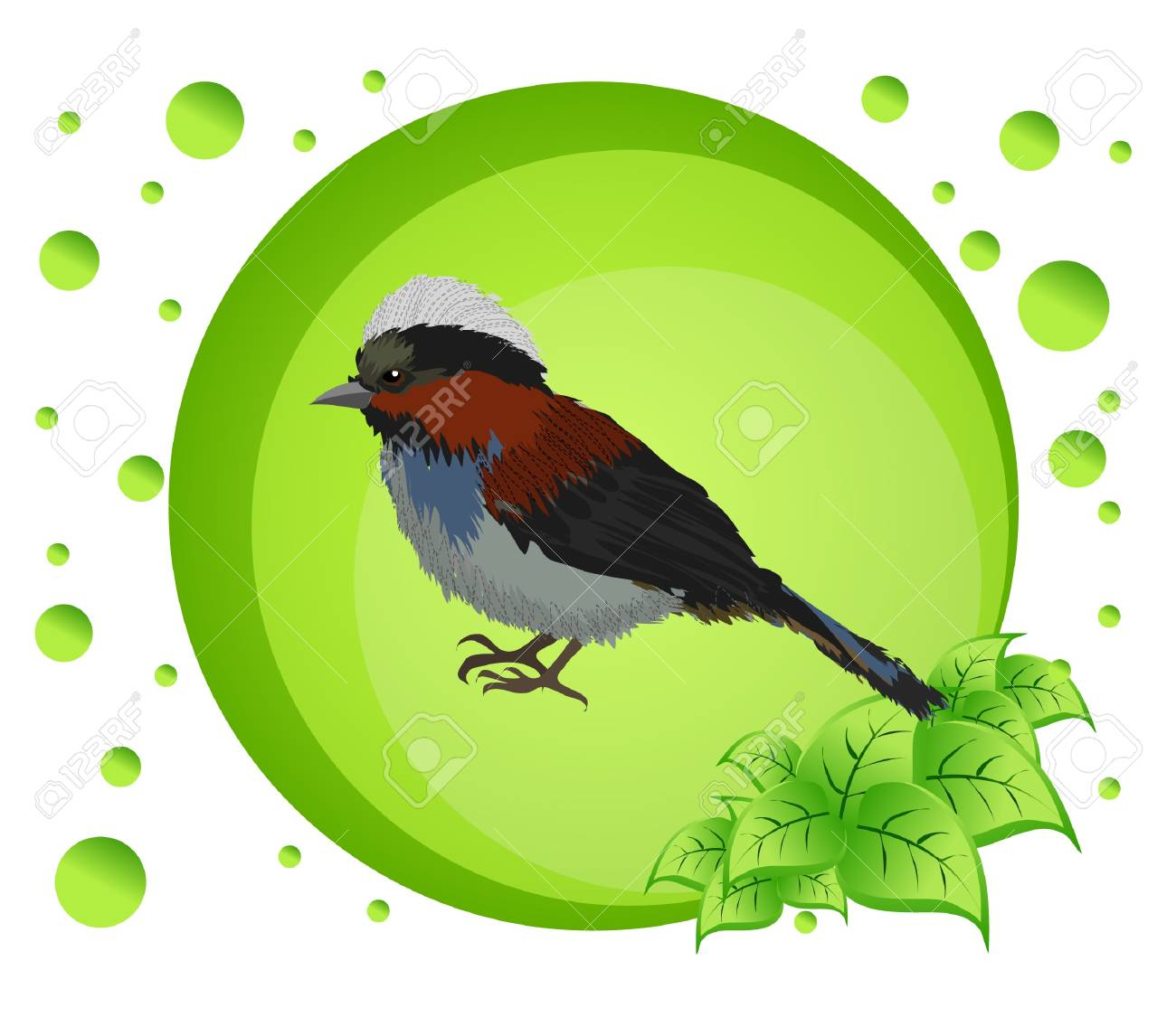 Vector illustration of a bird on colorful background Stock Vector - 17102918