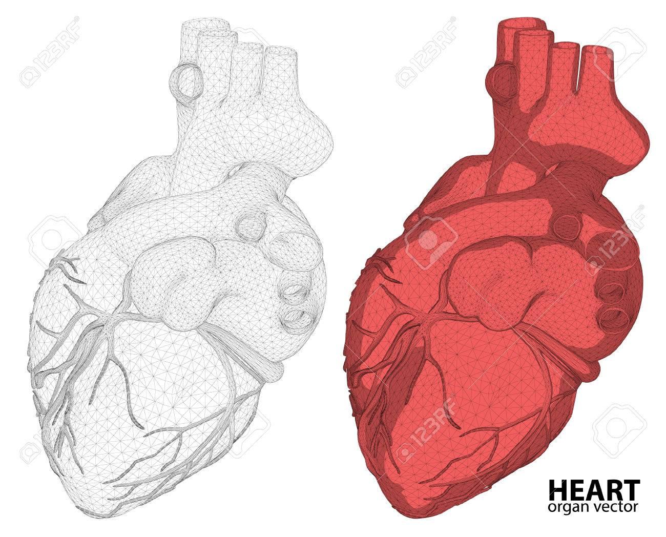 3d Alambre Malla Corazón Sistema Digestivo Aislado En El Fondo, De ...