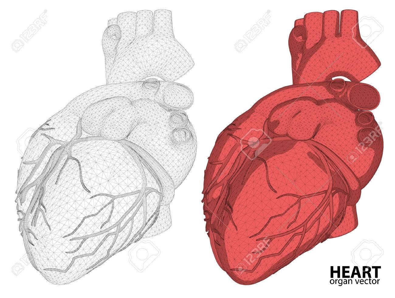 3d Herz Drahtmodell Verdauungssystem Auf Hintergrund Mesh, Für ...