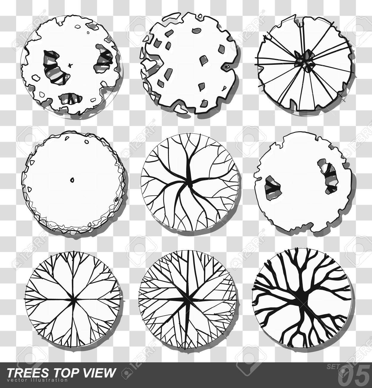 A set of Trees - top view  use in your landscape design  illustration