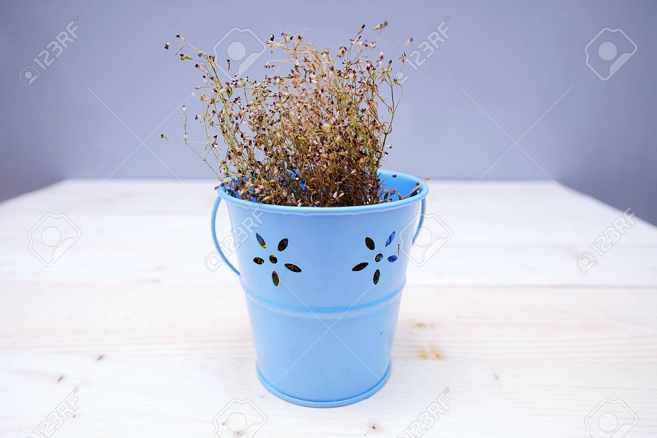 Dry Baby\'s Breath Flower In A Blue Pot On A Wooden Table Stock Photo ...