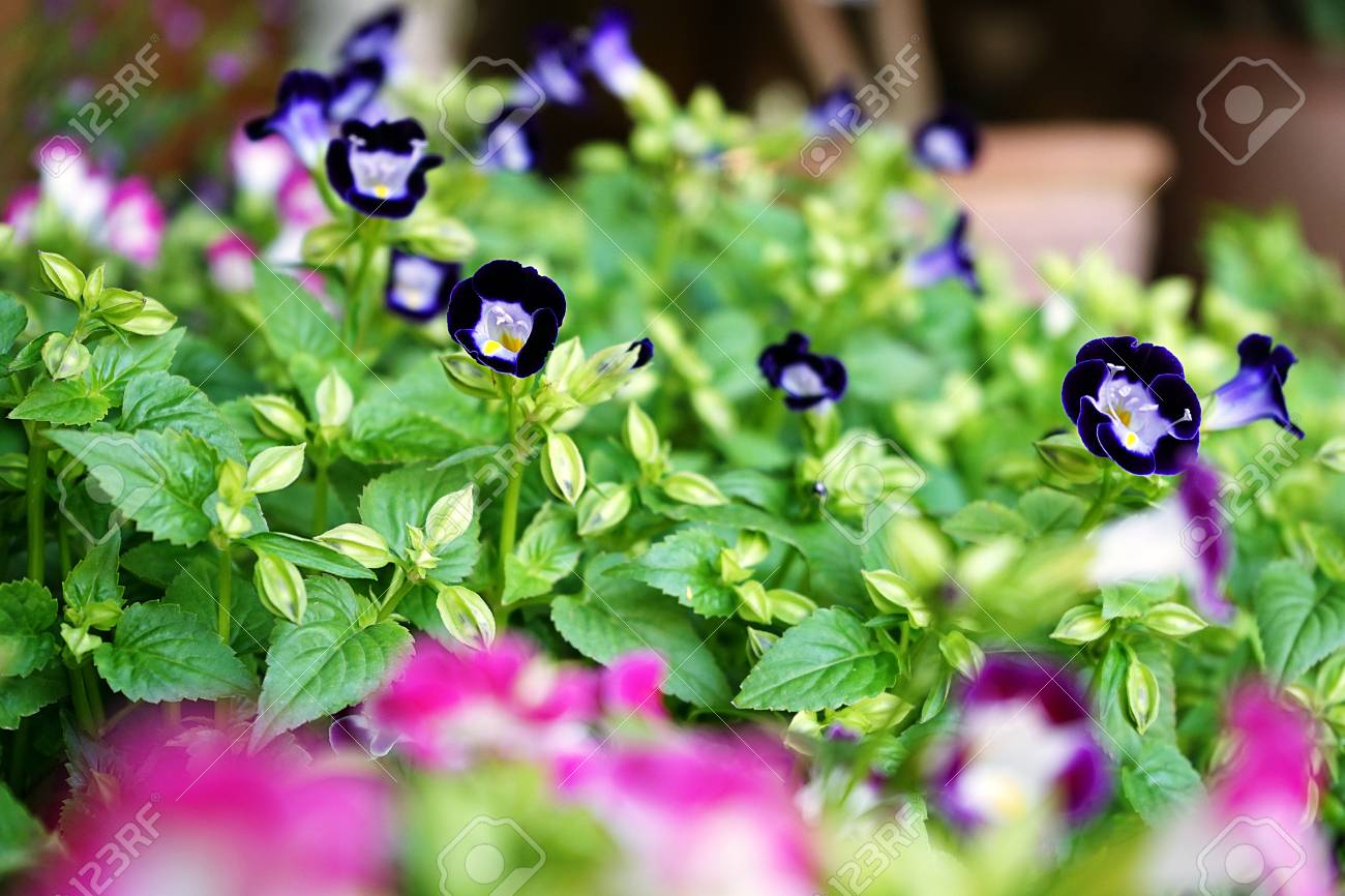 Small Violet Plant