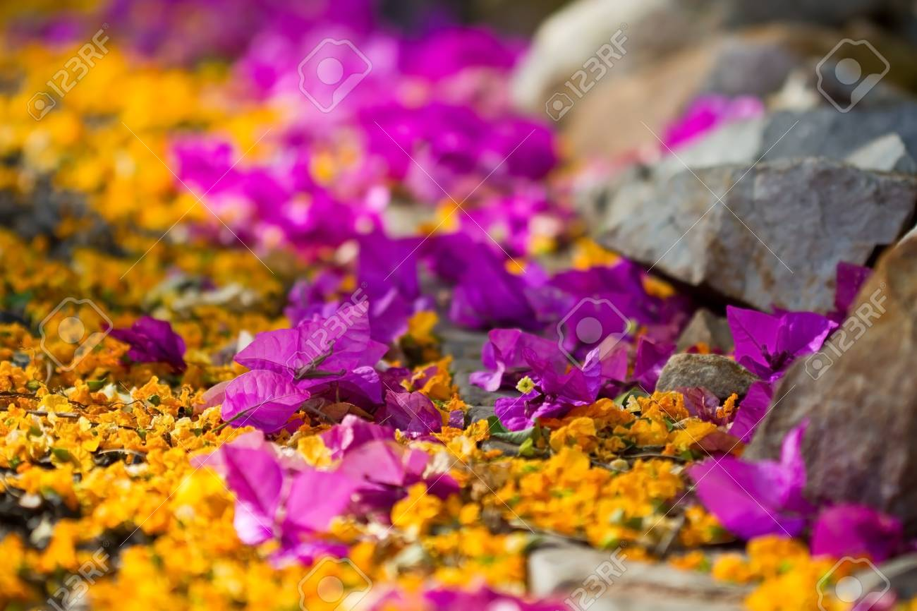 Pathway With Yellow And Purple Flowers With Rocks On The Side Stock