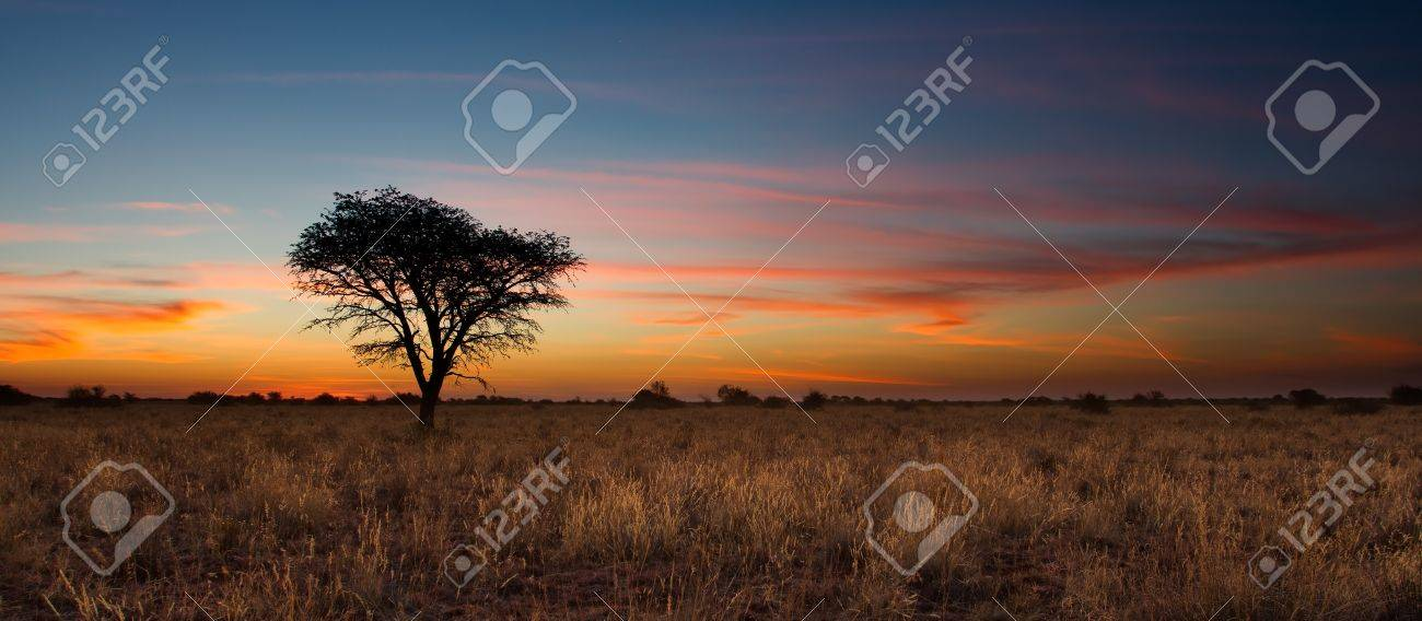 Lovely sunset in Kalahari with dead tree and bright colours - 20990358