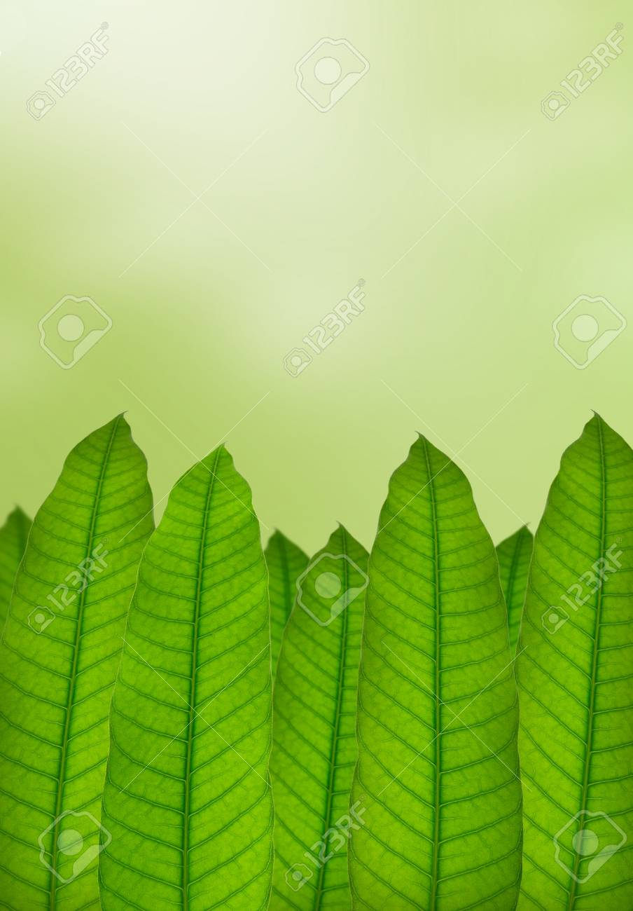 Green leaves with natural background Stock Photo - 9504256