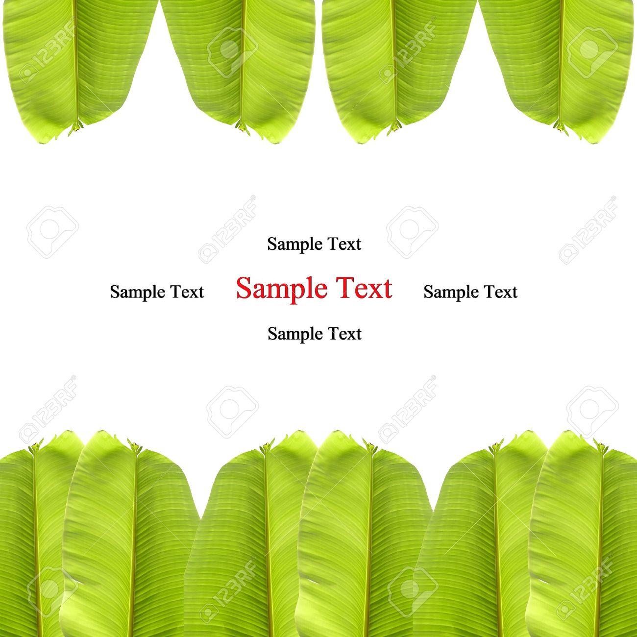 isolated banana leaf on white Stock Photo - 10020110