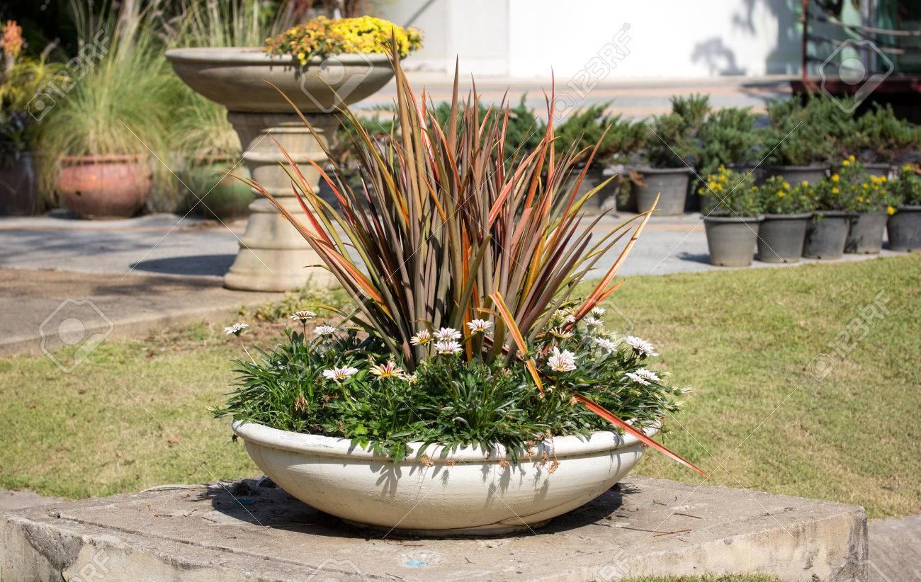 Plante En Pot Sur Jardin Exterieur