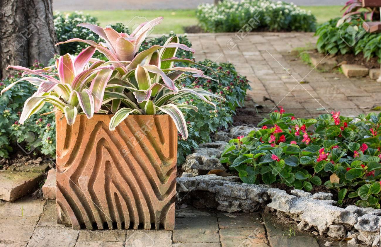 Plante De Bromeliacees En Pot Dans Le Jardin Exterieur